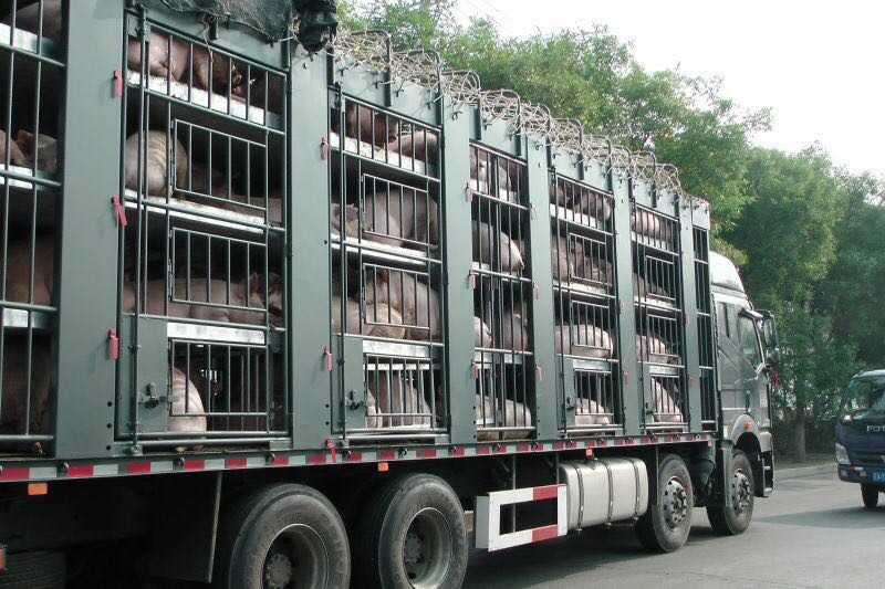 Multi floors livestock trailer