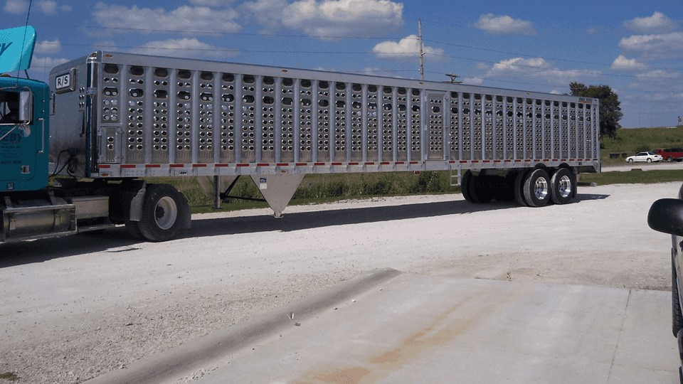 Livestock, Cattle, Cow Animal Transport Trailer Guide